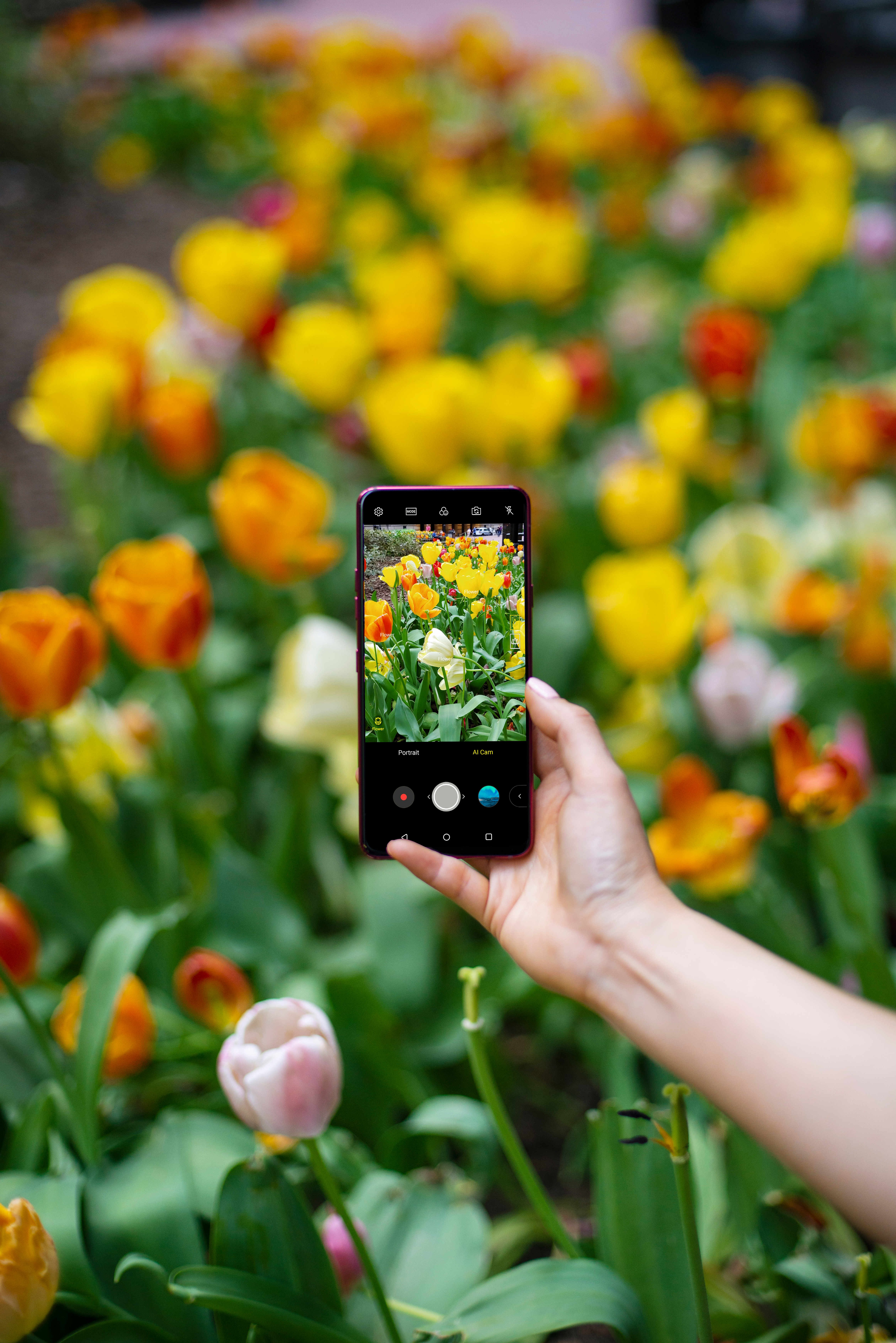 A person taking a photo of a patch of tulips with AI CAM on the LG G7 ThinQ