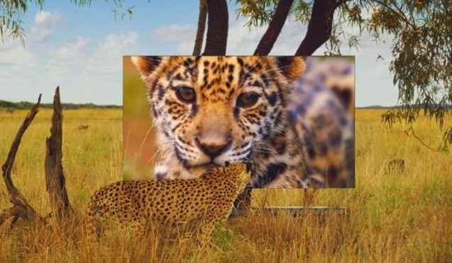 A still image of LG's promotional video clip which shows a leopard stands on the savanna to look at LG SIGNATURE OLED TV W which displays another leopard on its screen.