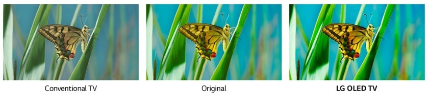 A comparison image to show the benefit of LG's new color algorithm to offer the vivider colors compared to pictures viewed on conventional TVs as well as by human eyes.